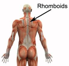 Rhomboid Stretch